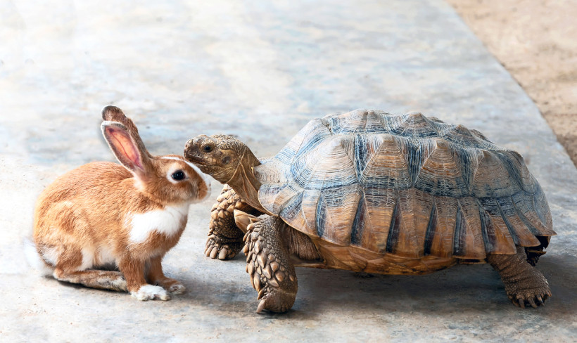 The Tortoise and the Hare: The Sales Progression Habits That Win The Race